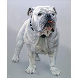 Retratos de mascotas por encargo